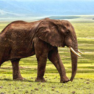 Elefant auf Leinwand